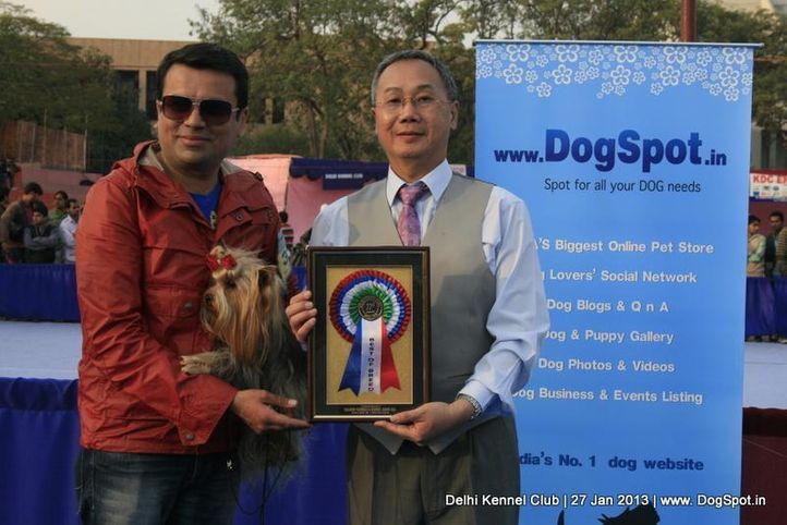 sw-79,yorkshire,, Delhi Dog Show 2013, DogSpot.in