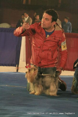 sw-79,yorkshire,, Delhi Dog Show 2013, DogSpot.in