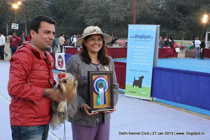 yorkshire, Delhi Dog Show 2013, DogSpot.in
