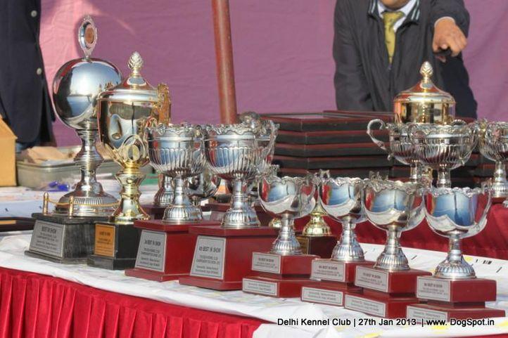 show trophy,sw-79,, Delhi Dog Show 2013, DogSpot.in