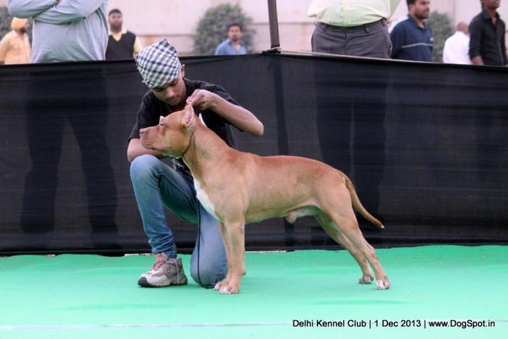 child handler,handled by child competition,sw-98,, Delhi Dog Show 2013, DogSpot.in