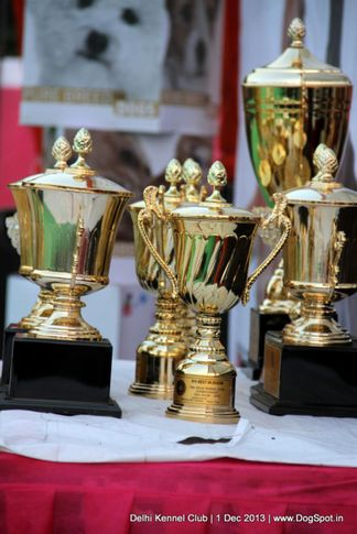 sw-98,trophies,, Delhi Dog Show 2013, DogSpot.in