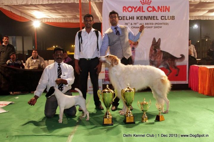 borzoi,ex-36,fox terrier,lineup,sw-98,, AM. GCH. CH. WEDIGIT LIL ITCH TH CELEBRITY, Smooth Fox Terrier, DogSpot.in