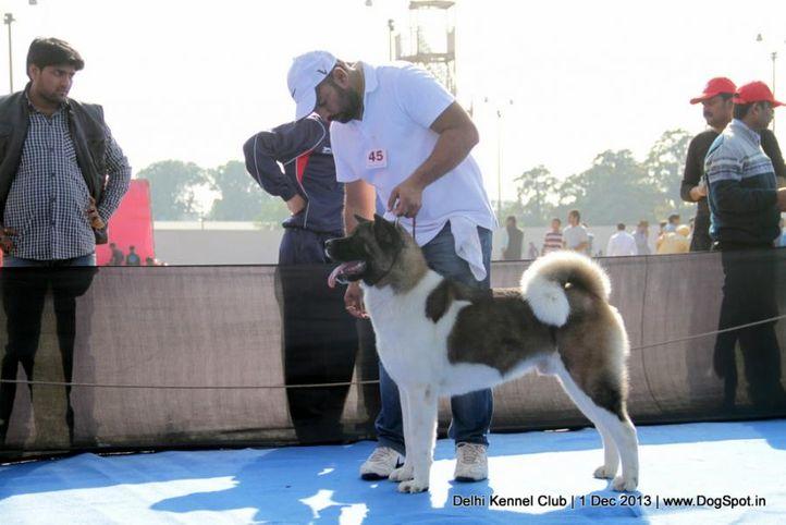 akita,sw-98,, Delhi Dog Show 2013, DogSpot.in