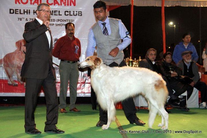 borzoi,sw-98,, Delhi Dog Show 2013, DogSpot.in