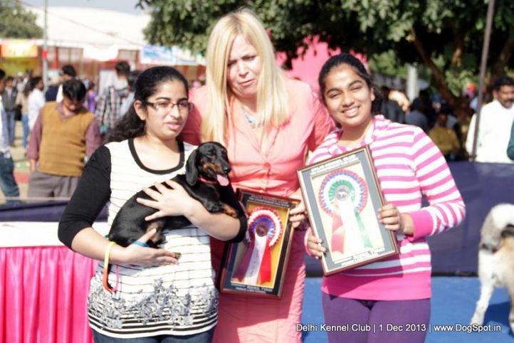 dachshund,sw-98,, Delhi Dog Show 2013, DogSpot.in