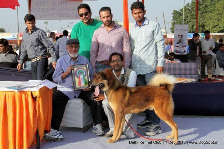 judge,sw-98,tibetan mastiff,, Delhi Dog Show 2013, DogSpot.in