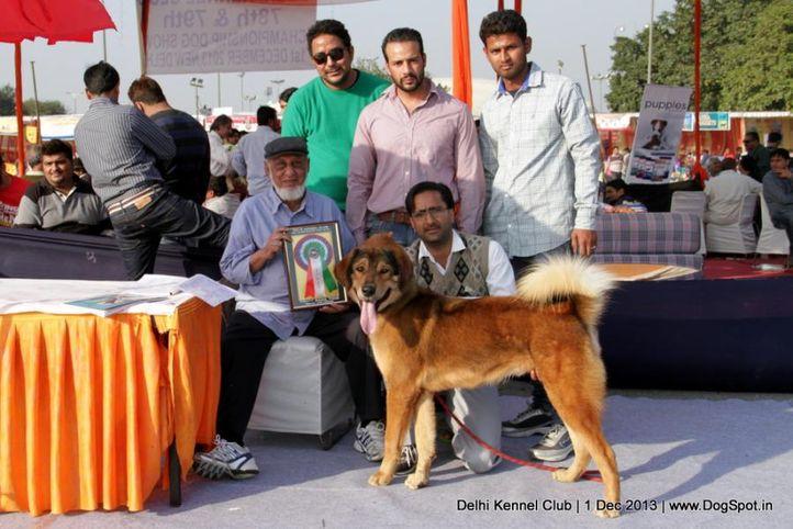 sw-98,tibetan mastiff,, Delhi Dog Show 2013, DogSpot.in
