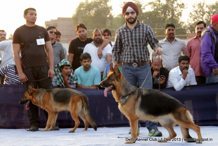 german shephard,gsd,sw-98,, Delhi Dog Show 2013, DogSpot.in