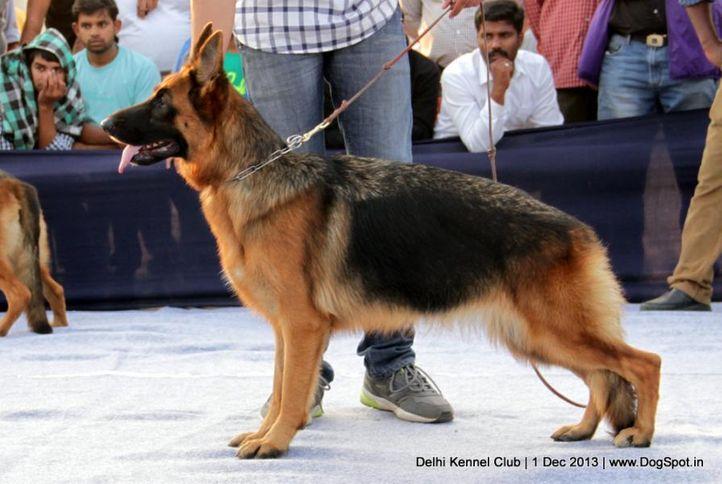 ex-326,german shephard,gsd,sw-98,, PALLISBER'S TATTO, German Shepherd Dog, DogSpot.in