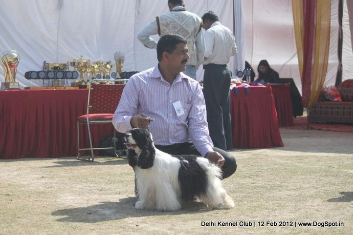 cocker,sw-52,, Delhi Kennel Club 2012, DogSpot.in