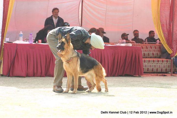 gsd,sw-52,, Delhi Kennel Club 2012, DogSpot.in