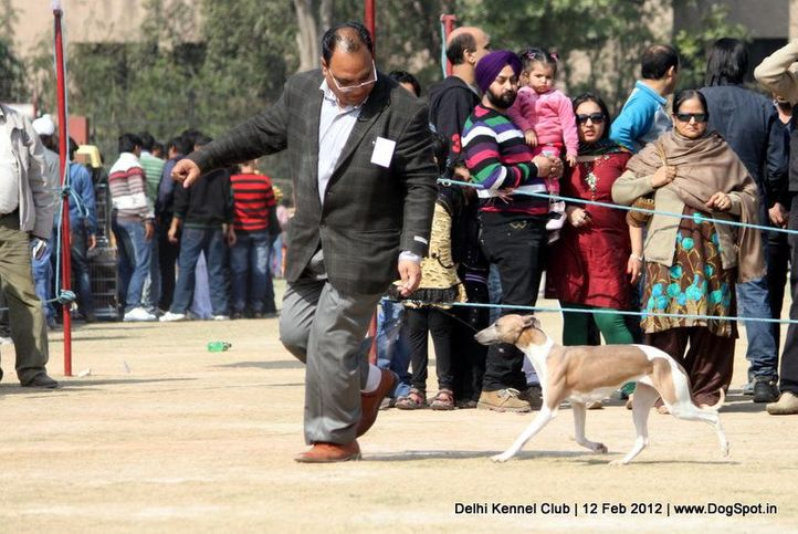 hounds,sw-52,, Delhi Kennel Club 2012, DogSpot.in
