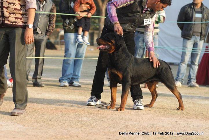 ex-217,rottweiler,sw-52,, NIK MIKKI ROTT, Rottweiler, DogSpot.in