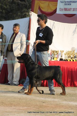 ex-293,rottweiler,sw-52,, Delhi Kennel Club 2012, DogSpot.in