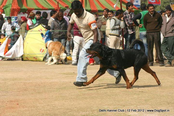 ex-297,rottweiler,sw-52,, Delhi Kennel Club 2012, DogSpot.in