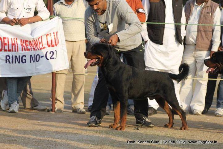 rottweiler,sw-52,, Delhi Kennel Club 2012, DogSpot.in