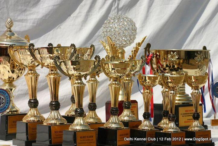 sw-52,trophies,, Delhi Kennel Club 2012, DogSpot.in