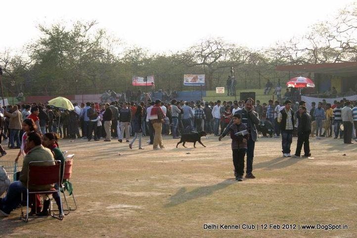 ground,sw-52,, Delhi Kennel Club 2012, DogSpot.in