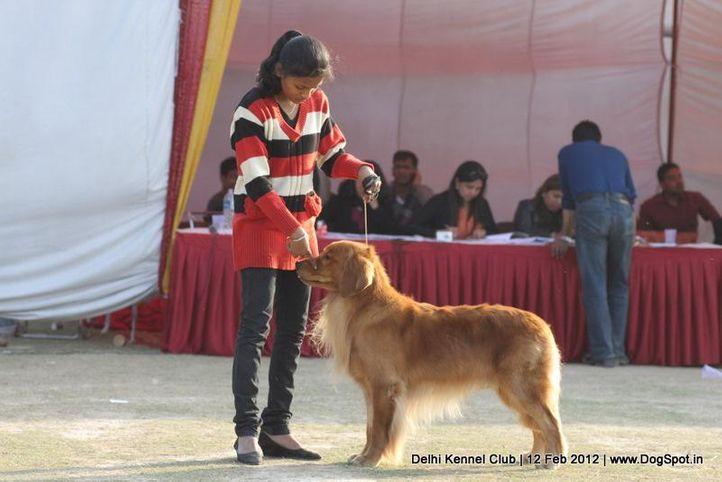 handling by children,sw-52,, Delhi Kennel Club 2012, DogSpot.in