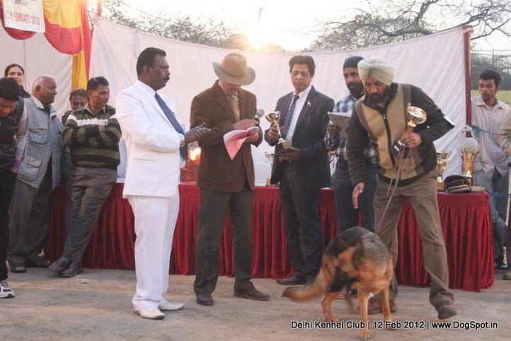 bis,lineup,sw-52,, Delhi Kennel Club 2012, DogSpot.in
