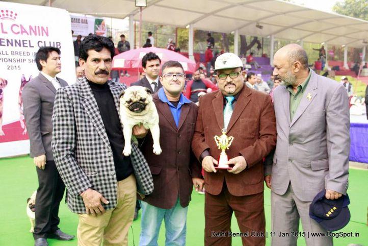 bob,pug,sw-145,, Delhi Kennel Club , DogSpot.in