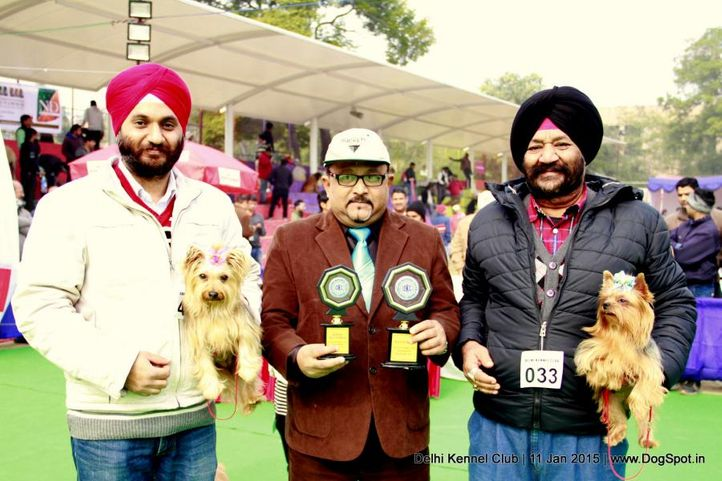 bob,sw-145,yorkshire terrier,, Delhi Kennel Club , DogSpot.in