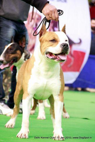 sw-145,terriers,, Delhi Kennel Club , DogSpot.in
