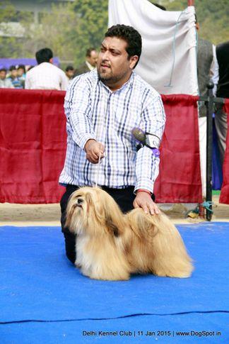 ex-68,lhasa apso,sw-145,, WHISBORNE SECRET SERVICE, Lhasa Apso, DogSpot.in