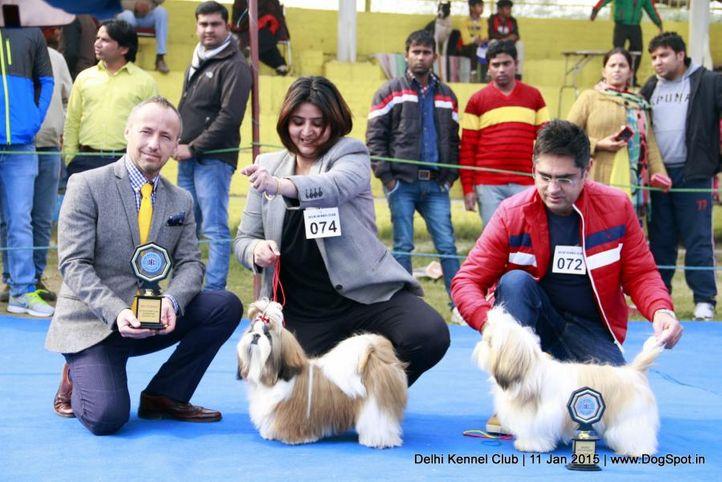 bob,rbob,shih tzu,sw-145,, Delhi Kennel Club , DogSpot.in