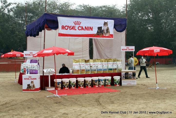 ground,sw-145,trophy,, Delhi Kennel Club , DogSpot.in