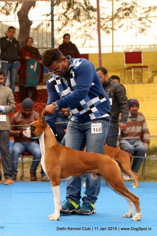 boxer,ex-166,sw-145,, VELINTINO'S SHADE S SKY IS IT LIMIT, Boxer, DogSpot.in