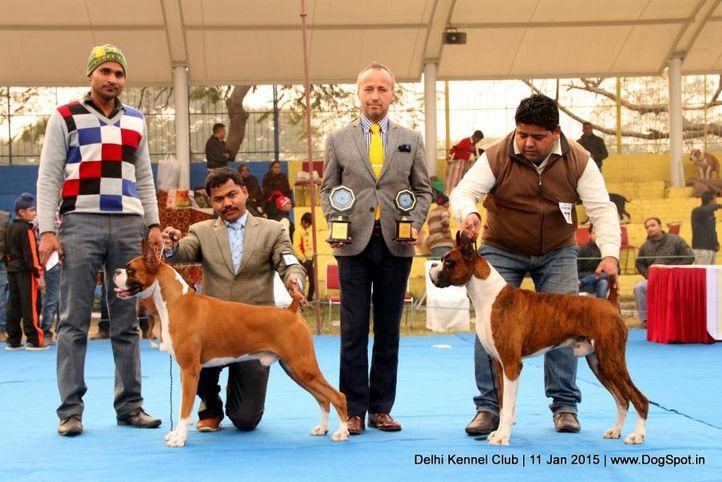 bob,boxer,sw-145,, Delhi Kennel Club , DogSpot.in