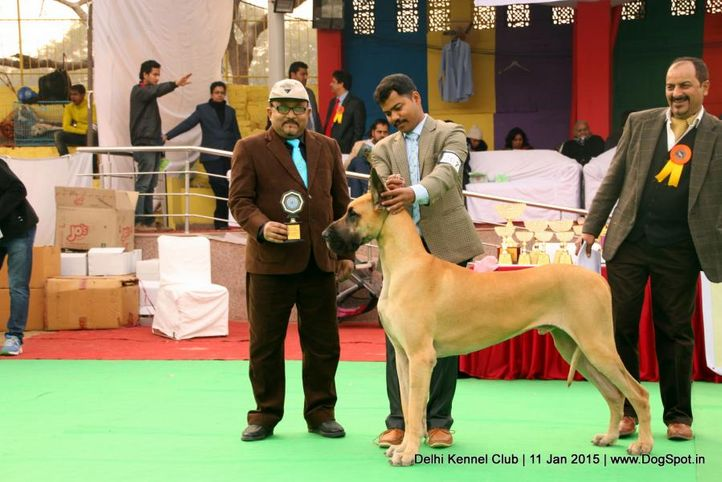 ex-207,great dane,rbob,sw-145,, BISS AM. CH. MYJON'S RAODANE'S TOTAL RECALL, Great Dane, DogSpot.in
