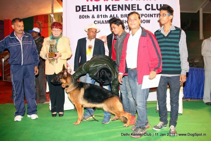 2nd best in show,ex-320,line up,sw-145,, JERRI, German Shepherd Dog, DogSpot.in