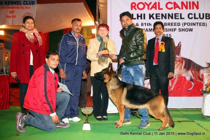 line up,sw-145,, Delhi Kennel Club , DogSpot.in