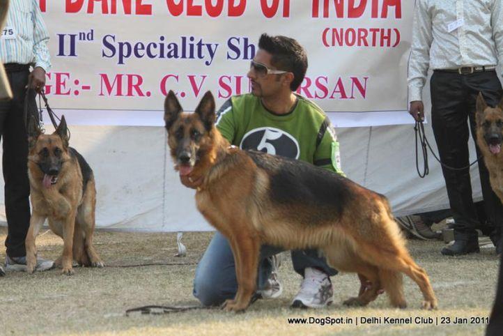 ex-277,gsd,sw-25,, LYRA VOM BRACH MARK, German Shepherd Dog, DogSpot.in