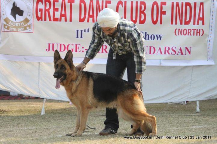 ex-278,gsd,sw-25,, TAMY LEE VON DER BURG, German Shepherd Dog, DogSpot.in