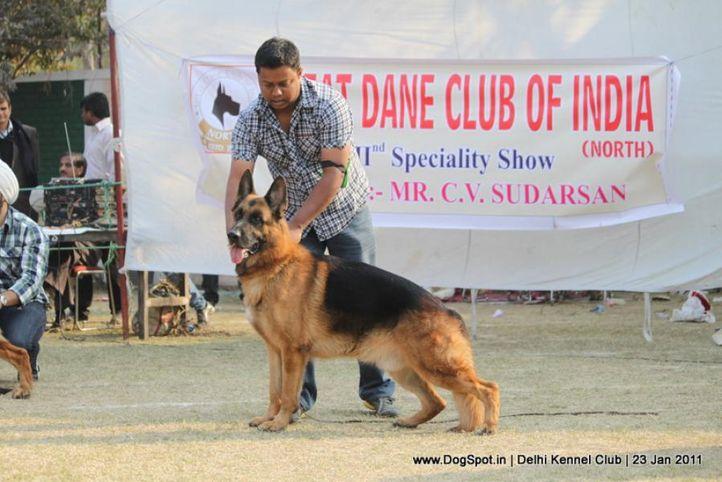 ex-281,gsd,sw-25,, DKC 2011, DogSpot.in