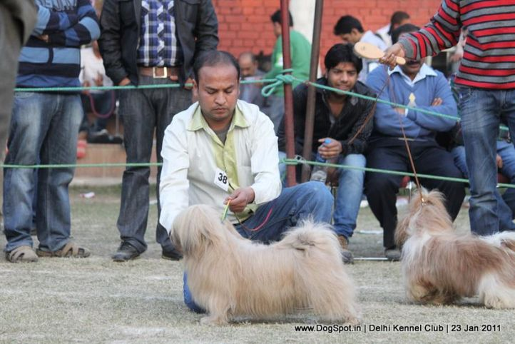 ex-38,sw-25,utility,, CH. SIMBA, Lhasa Apso, DogSpot.in