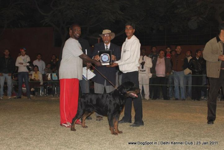 lineup,rottweiler,sw-25,, DKC 2011, DogSpot.in