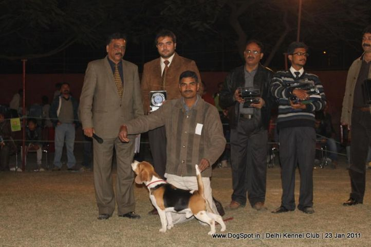 beagle,ex-53,lineup,sw-25,, BLUEBELLS ALICE, Beagle, DogSpot.in