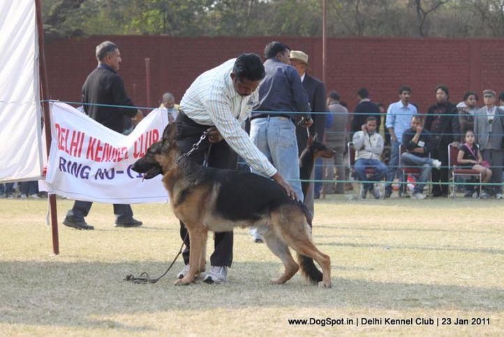 gsd,sw-25,, DKC 2011, DogSpot.in