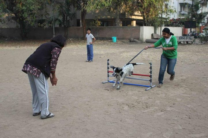dog agility -pune by its pawssible, Dog Agility -Pune by Its Pawssible, DogSpot.in