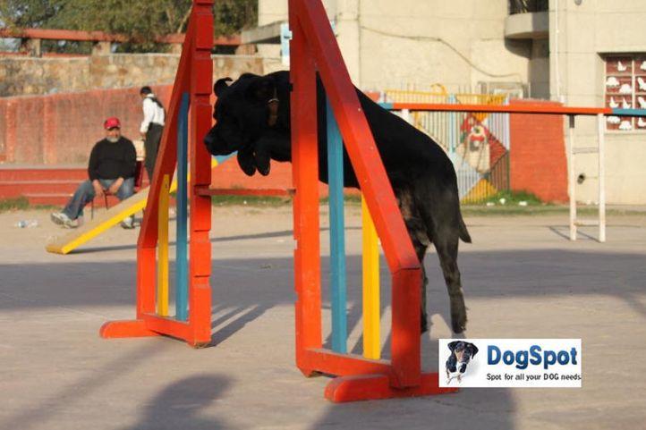 Agility,, Dog Agility Show, DogSpot.in