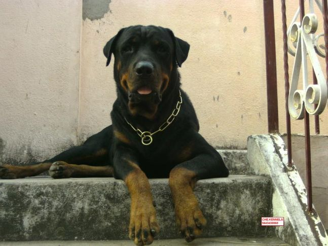 , dog business, DogSpot.in