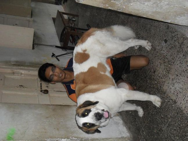 my dog mighty, my dog mighty, DogSpot.in