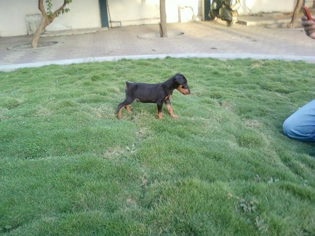my dog zed, My dog Zed, DogSpot.in