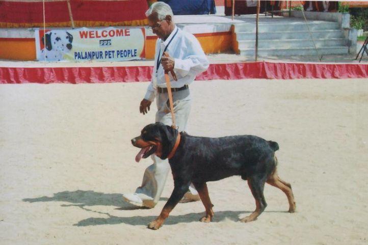 dogshow in my city, dogshow in my city, DogSpot.in