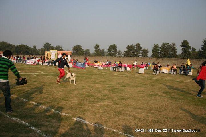 oaci venue,, DogSpot @ OACI, DogSpot.in